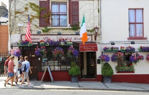 Ireland Guiena Pig